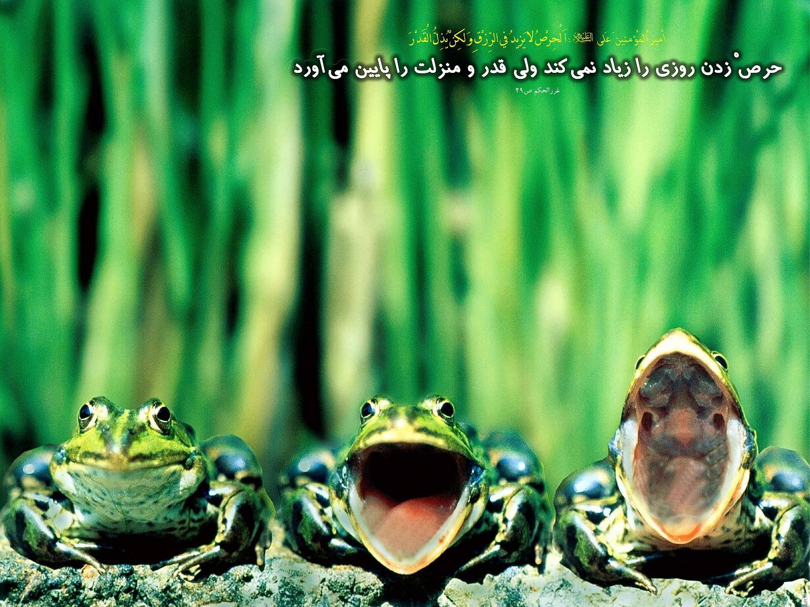 Hadis (126) Www.Nooriazbehesht.ir .jpg (1600×1200)